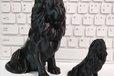 2019-11-02T03:01:00.313Z-lion.jpg