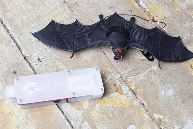 Bat Listener