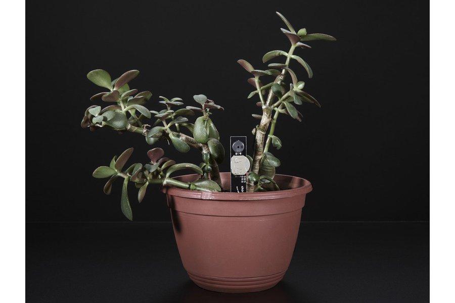 Plant Watering Alerter Soil Sensor(8861)