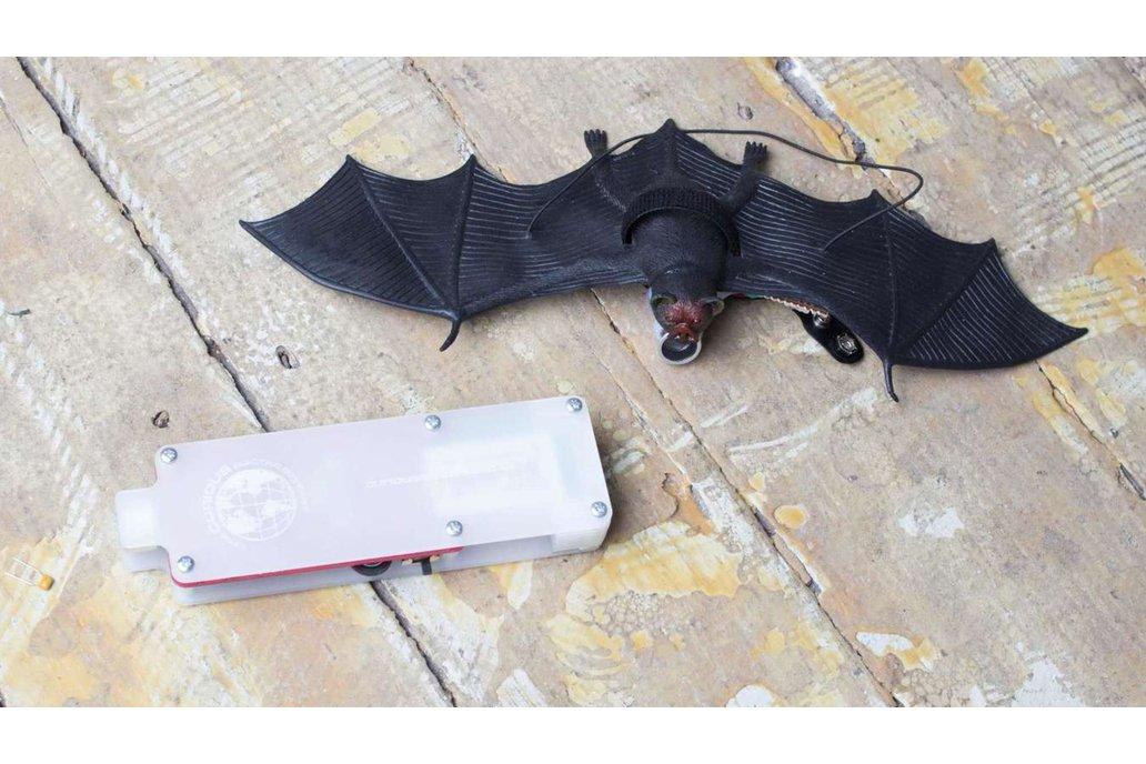 Bat Listener 1